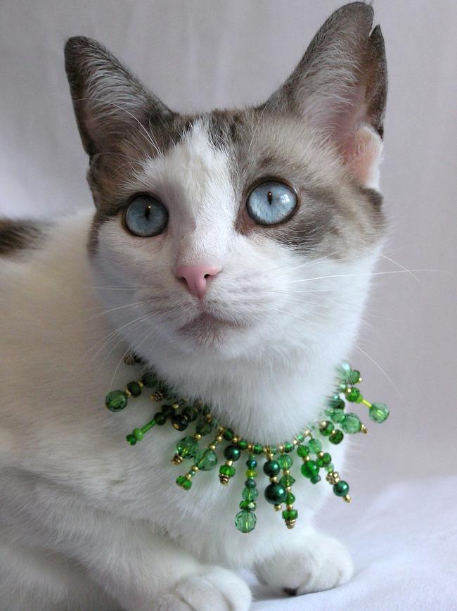 31-Gatos-mais-elegantes-e-estilosos-do-mundo-Blog-Animal (26)
