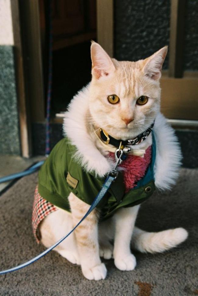 31-Gatos-mais-elegantes-e-estilosos-do-mundo-Blog-Animal (27)