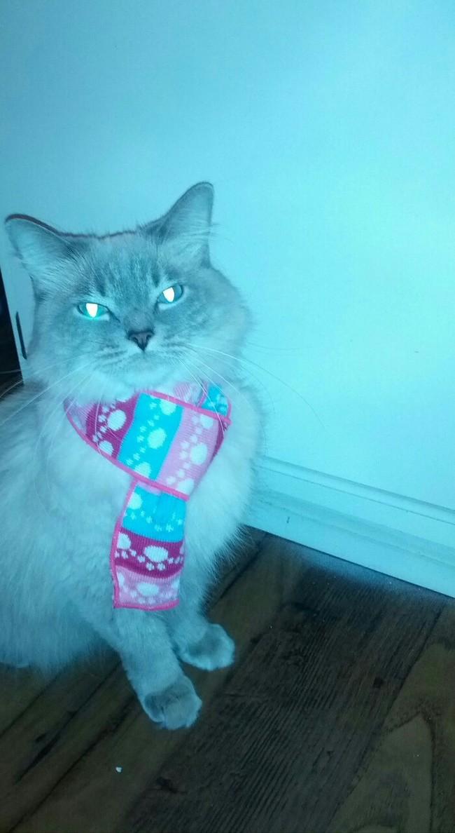 31-Gatos-mais-elegantes-e-estilosos-do-mundo-Blog-Animal (28)