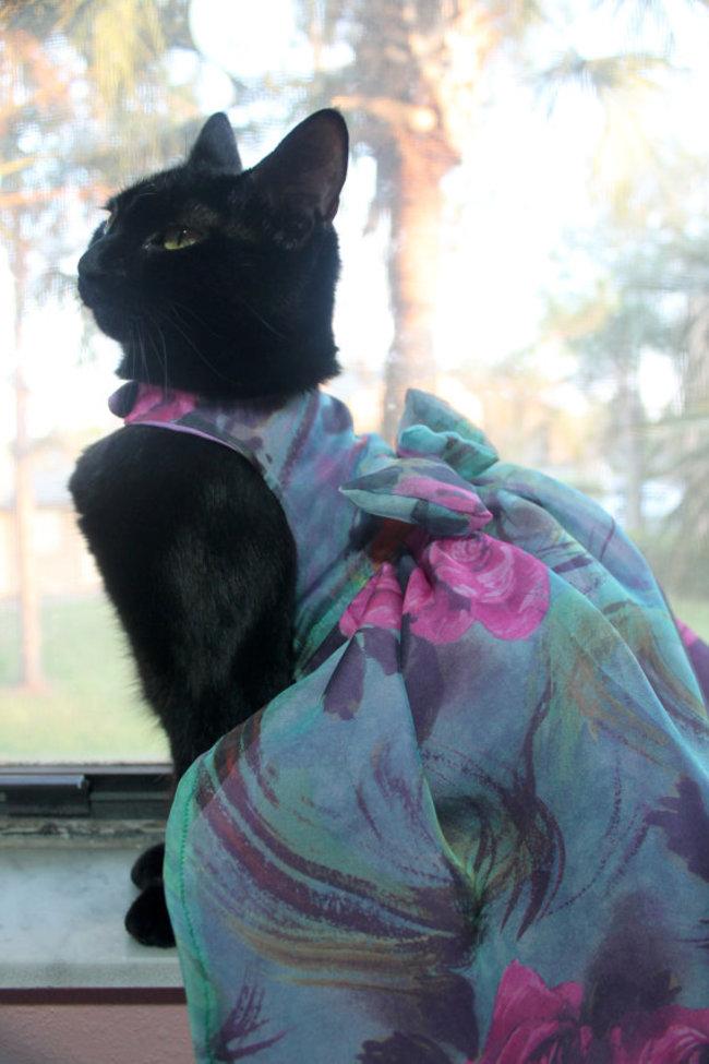 31-Gatos-mais-elegantes-e-estilosos-do-mundo-Blog-Animal (29)