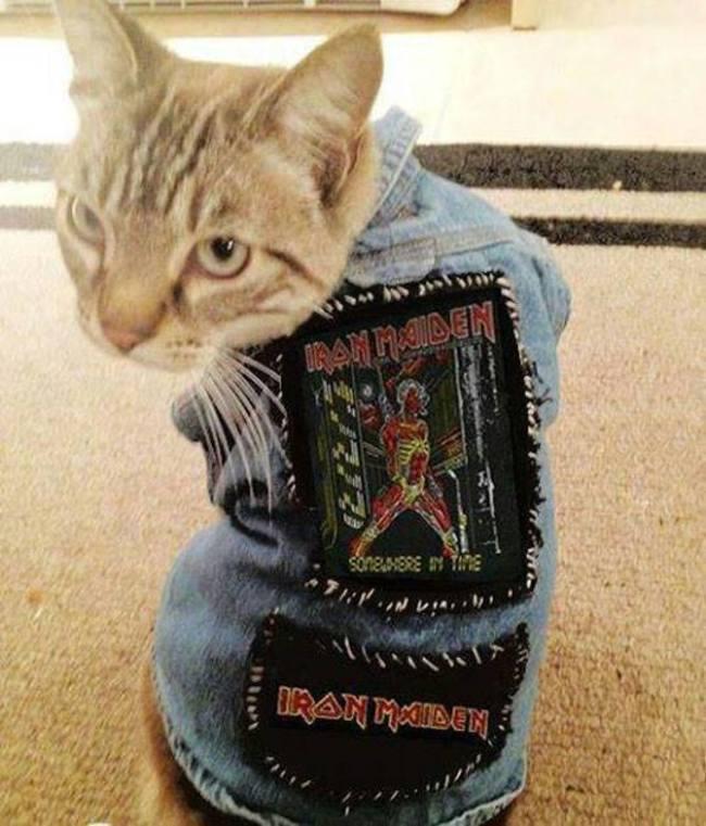 31-Gatos-mais-elegantes-e-estilosos-do-mundo-Blog-Animal (3)
