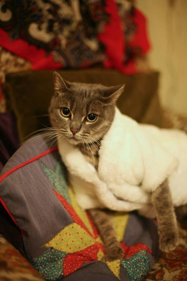 31-Gatos-mais-elegantes-e-estilosos-do-mundo-Blog-Animal (6)