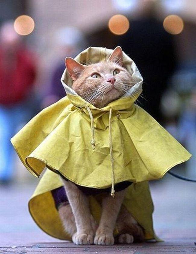 31-Gatos-mais-elegantes-e-estilosos-do-mundo-Blog-Animal (8)