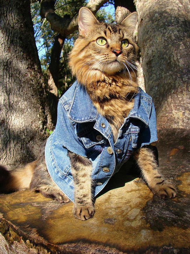31-Gatos-mais-elegantes-e-estilosos-do-mundo-Blog-Animal (9)