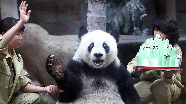 32-Animais-extremamente-felizes-em-suas-festas-de-aniversário-Blog-Animal (10)