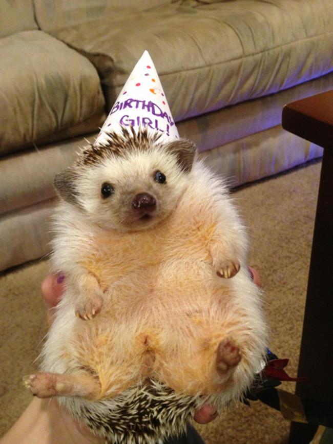 32-Animais-extremamente-felizes-em-suas-festas-de-aniversário-Blog-Animal (12)