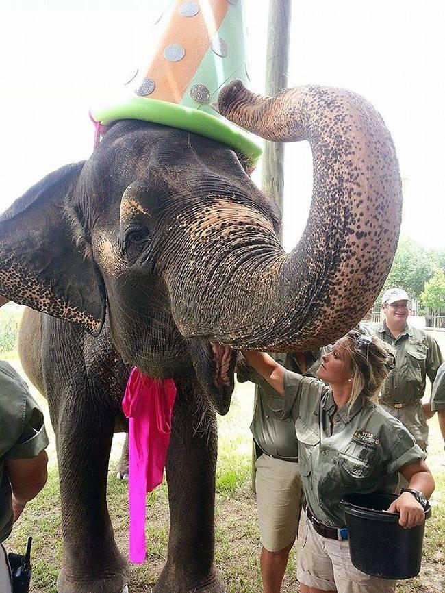 32-Animais-extremamente-felizes-em-suas-festas-de-aniversário-Blog-Animal (13)