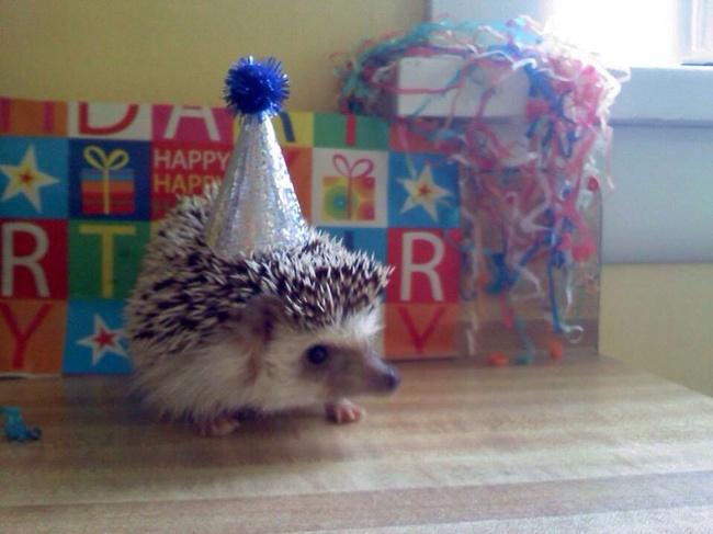 32-Animais-extremamente-felizes-em-suas-festas-de-aniversário-Blog-Animal (14)