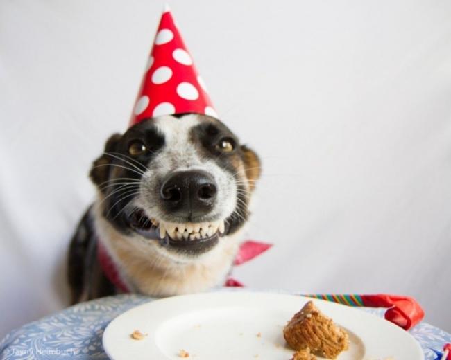 32-Animais-extremamente-felizes-em-suas-festas-de-aniversário-Blog-Animal (16)