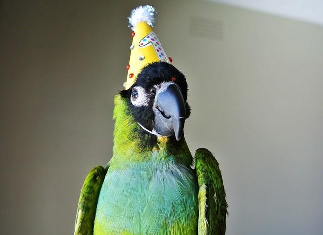 32-Animais-extremamente-felizes-em-suas-festas-de-aniversário-Blog-Animal (17)