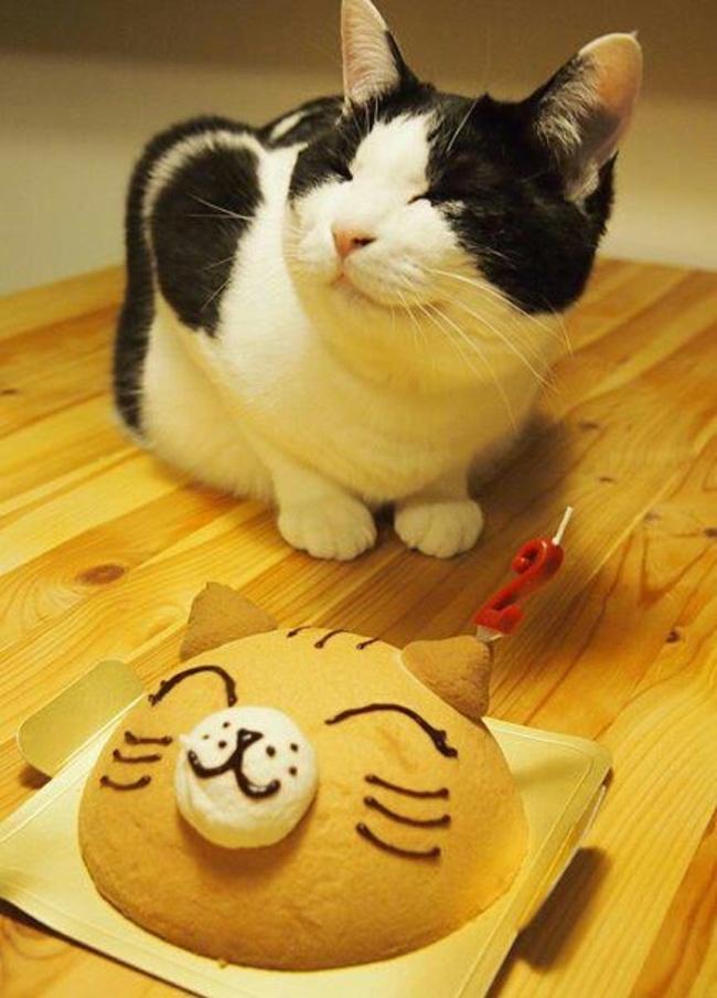 32-Animais-extremamente-felizes-em-suas-festas-de-aniversário-Blog-Animal (18)