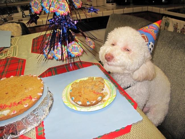 32-Animais-extremamente-felizes-em-suas-festas-de-aniversário-Blog-Animal (21)
