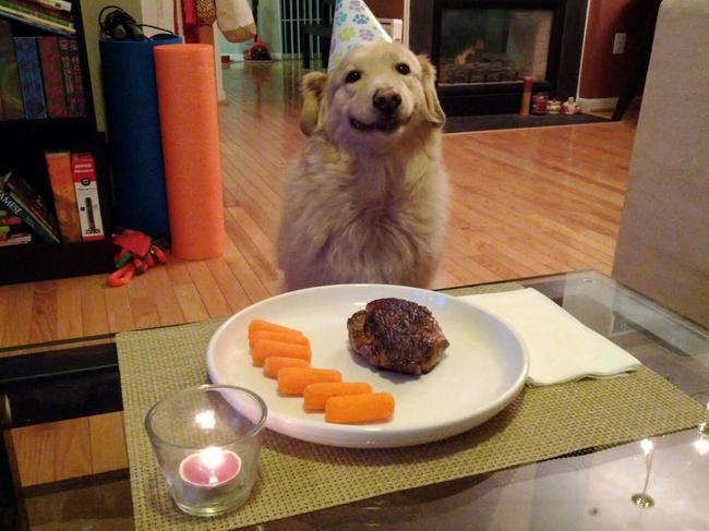 32-Animais-extremamente-felizes-em-suas-festas-de-aniversário-Blog-Animal (23)