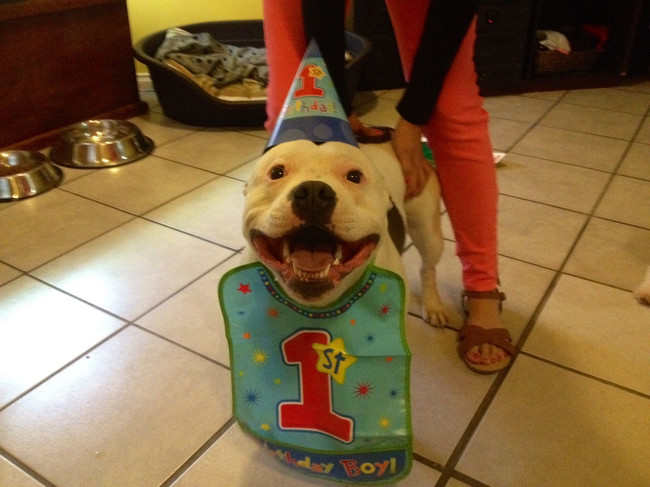 32-Animais-extremamente-felizes-em-suas-festas-de-aniversário-Blog-Animal (24)