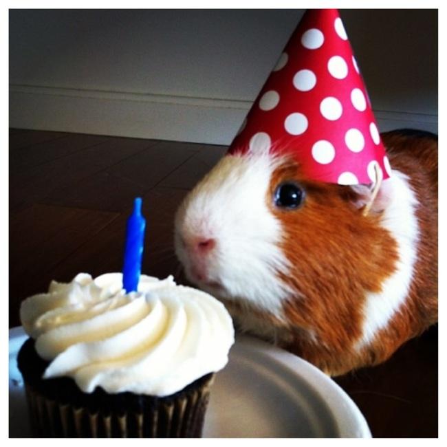 32-Animais-extremamente-felizes-em-suas-festas-de-aniversário-Blog-Animal (25)