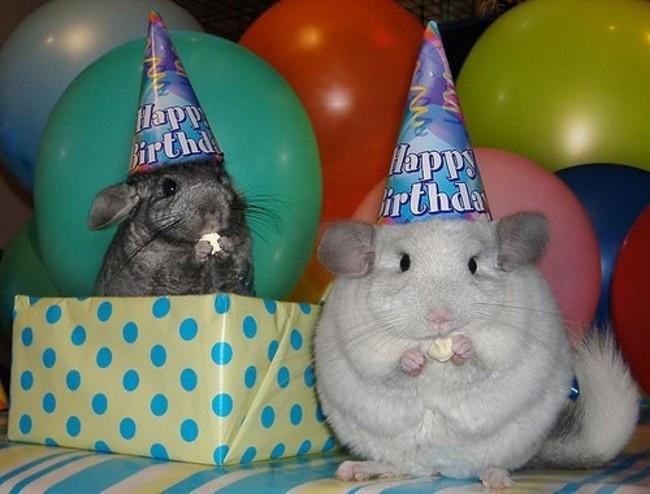 32-Animais-extremamente-felizes-em-suas-festas-de-aniversário-Blog-Animal (26)