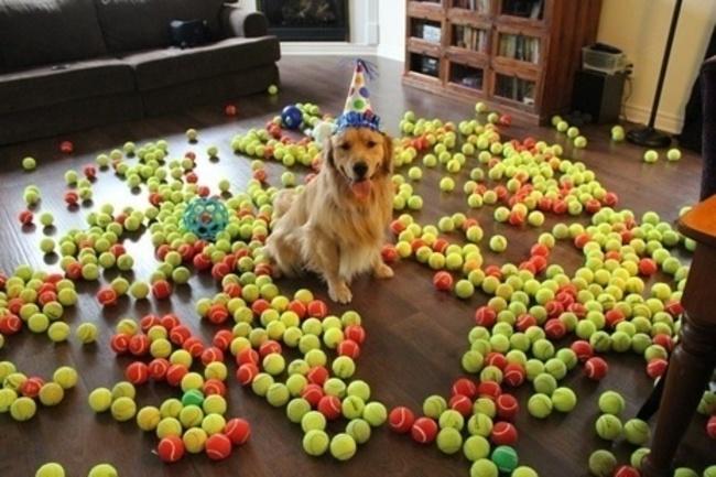32-Animais-extremamente-felizes-em-suas-festas-de-aniversário-Blog-Animal (27)