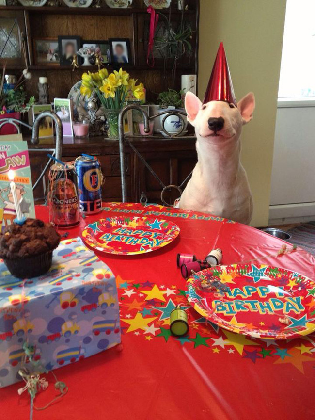 32-Animais-extremamente-felizes-em-suas-festas-de-aniversário-Blog-Animal (28)