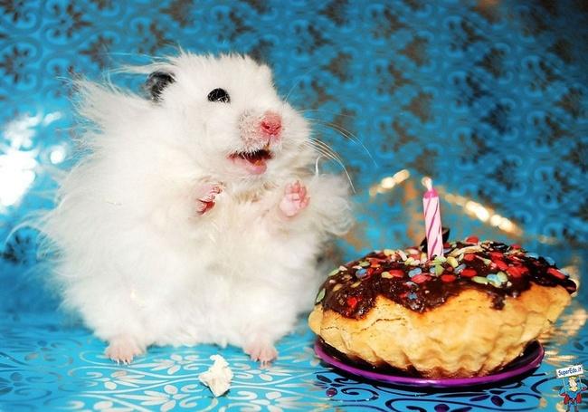 32-Animais-extremamente-felizes-em-suas-festas-de-aniversário-Blog-Animal (3)