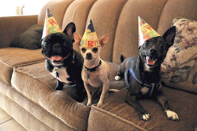 32-Animais-extremamente-felizes-em-suas-festas-de-aniversário-Blog-Animal (5)