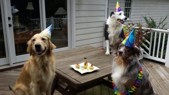 32-Animais-extremamente-felizes-em-suas-festas-de-aniversário-Blog-Animal (7)