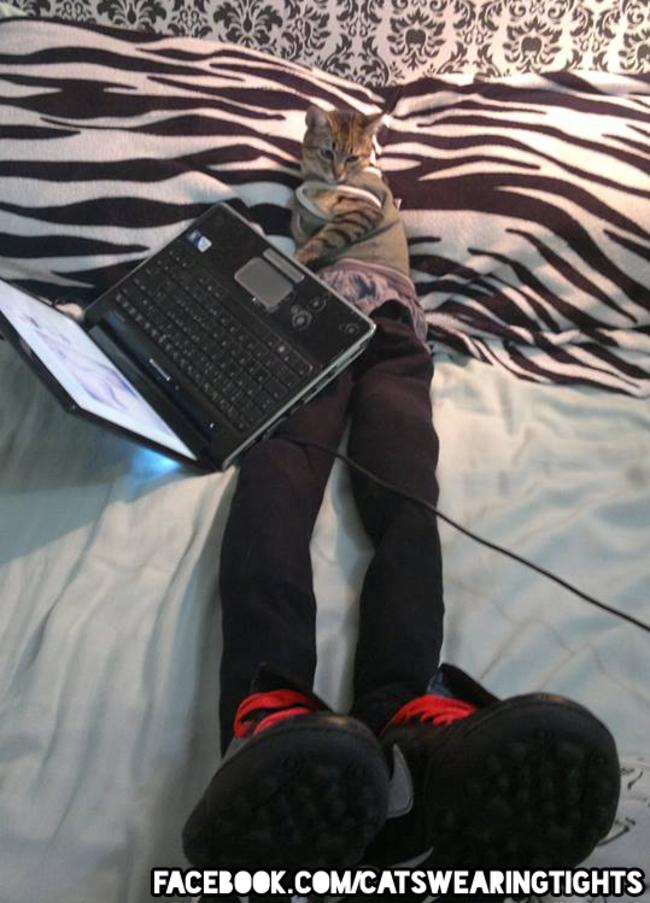 44-Fotos-engraçadas-de-gatos-usando-calças-Blog-Animal (1)