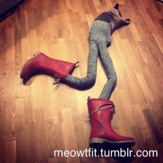 44-Fotos-engraçadas-de-gatos-usando-calças-Blog-Animal (10)