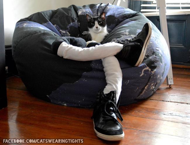 44-Fotos-engraçadas-de-gatos-usando-calças-Blog-Animal (11)