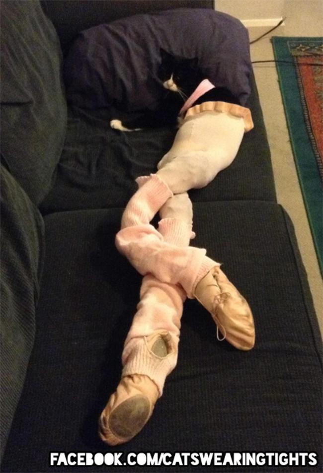 44-Fotos-engraçadas-de-gatos-usando-calças-Blog-Animal (12)