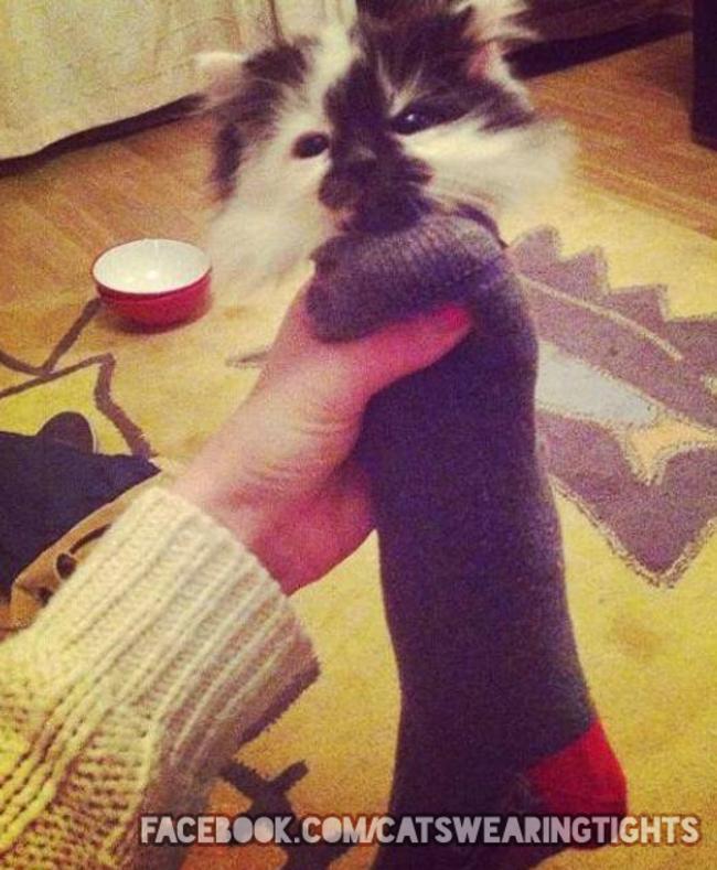 44-Fotos-engraçadas-de-gatos-usando-calças-Blog-Animal (13)