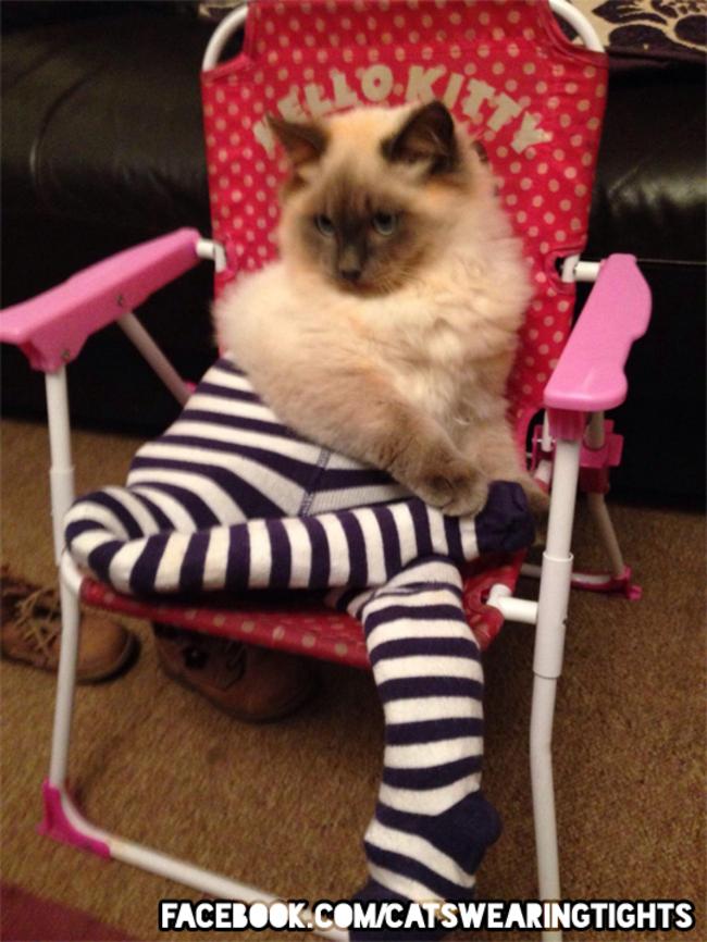 44-Fotos-engraçadas-de-gatos-usando-calças-Blog-Animal (2)
