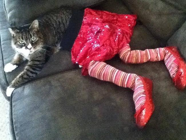 44-Fotos-engraçadas-de-gatos-usando-calças-Blog-Animal (20)