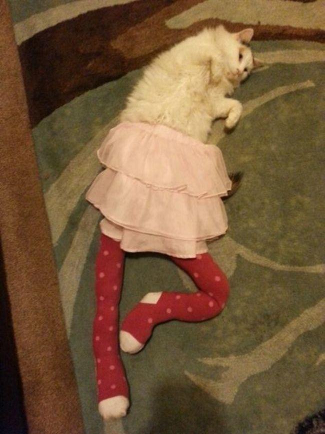 44-Fotos-engraçadas-de-gatos-usando-calças-Blog-Animal (22)