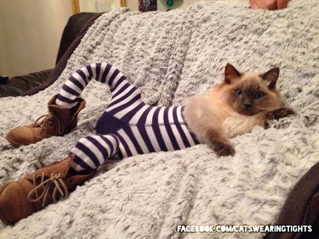 44-Fotos-engraçadas-de-gatos-usando-calças-Blog-Animal (24)