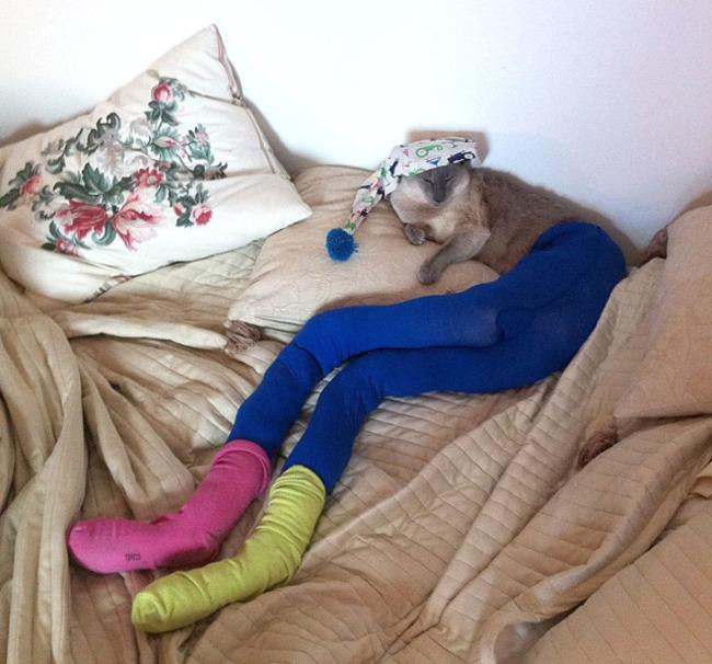 44-Fotos-engraçadas-de-gatos-usando-calças-Blog-Animal (25)