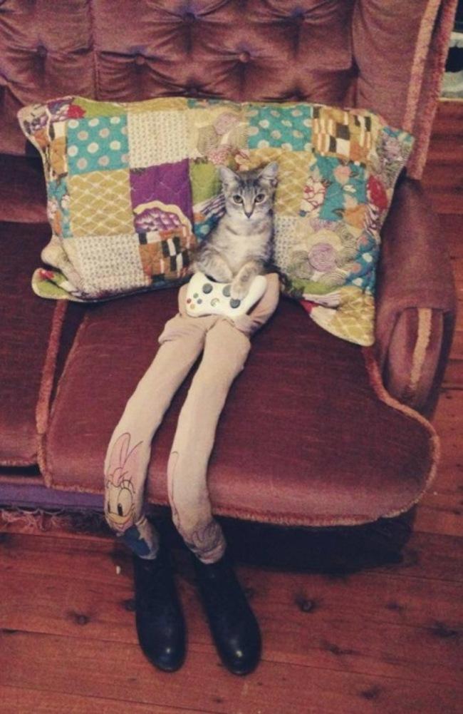 44-Fotos-engraçadas-de-gatos-usando-calças-Blog-Animal (28)