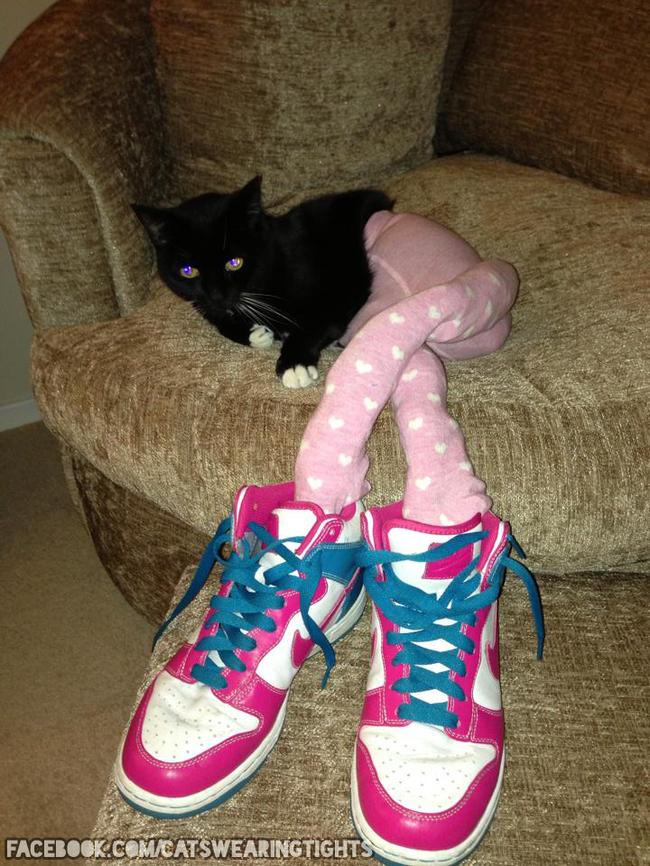 44-Fotos-engraçadas-de-gatos-usando-calças-Blog-Animal (3)