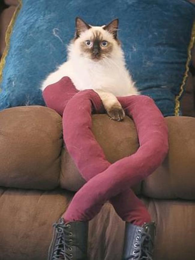 44-Fotos-engraçadas-de-gatos-usando-calças-Blog-Animal (4)