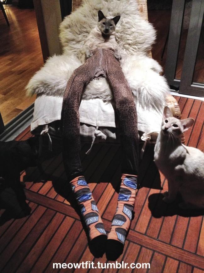44-Fotos-engraçadas-de-gatos-usando-calças-Blog-Animal (5)