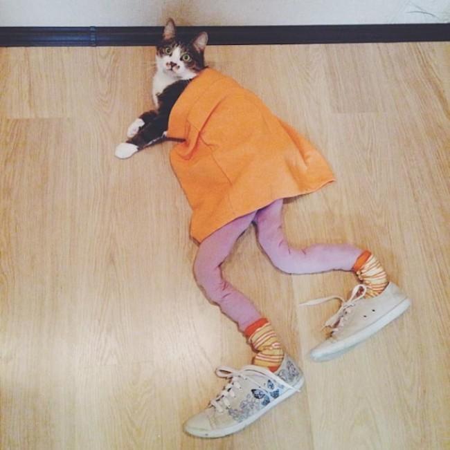 44-Fotos-engraçadas-de-gatos-usando-calças-Blog-Animal (6)