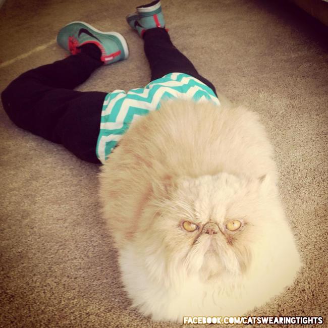 44-Fotos-engraçadas-de-gatos-usando-calças-Blog-Animal (7)