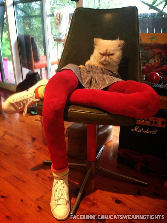 44-Fotos-engraçadas-de-gatos-usando-calças-Blog-Animal (8)
