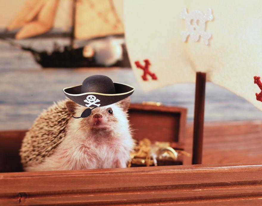 As aventuras do ouriço Humphrey J (12)