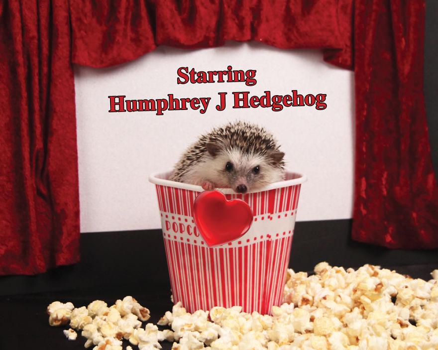 As aventuras do ouriço Humphrey J (14)