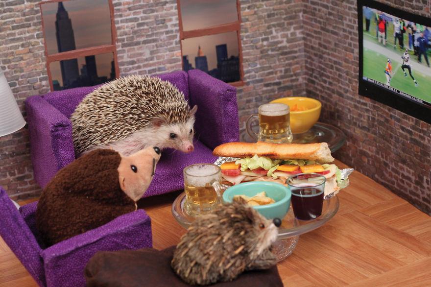 As aventuras do ouriço Humphrey J (5)