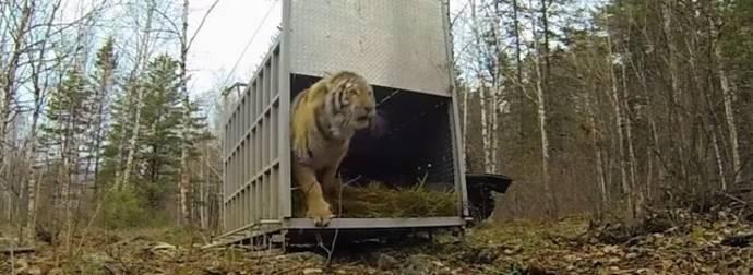 As emocionantes reações de animais sendo libertados pela primeira vez