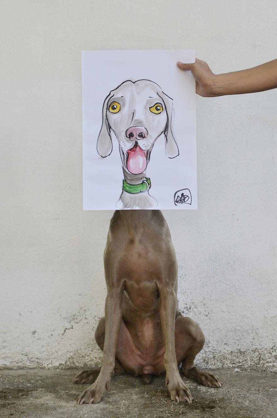 Bruma é protagonista nas fotos de seu humano fotógrafo (2)