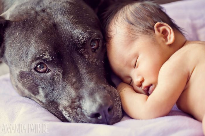 Cães grandes e crianças pequenas (11)