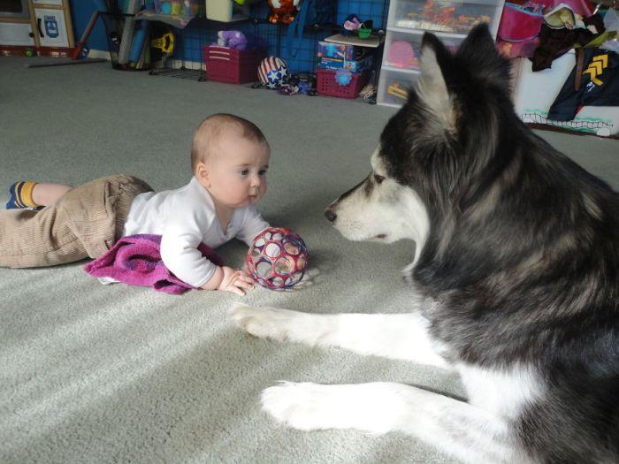Cães grandes e crianças pequenas (13)
