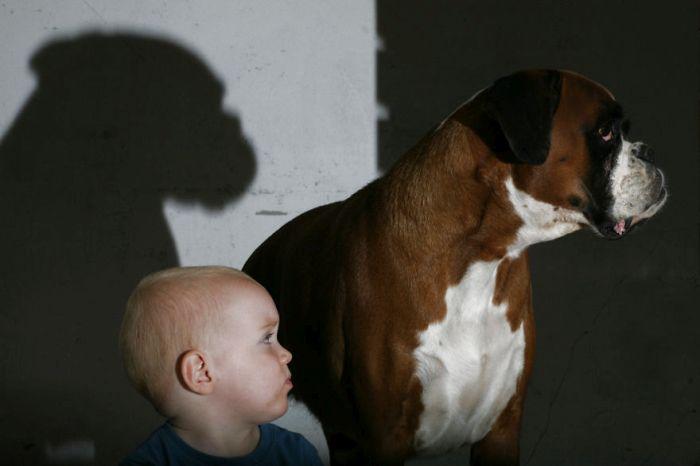 Cães grandes e crianças pequenas (15)